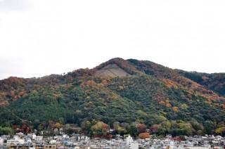 2011/12/04 10:59 落葉樹と照葉樹