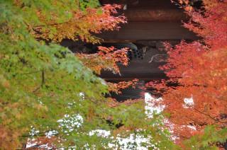2011/12/05 真如堂、梵鐘。毎日朝と夕方の6時に鐘が鳴る