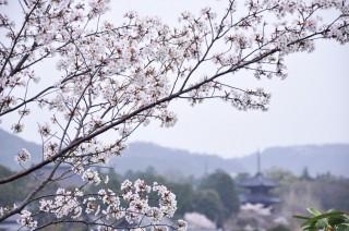 2012/04/13 16:40 ふたたび、雨の黒谷