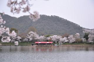2012/04/13 11:24 大沢池にて