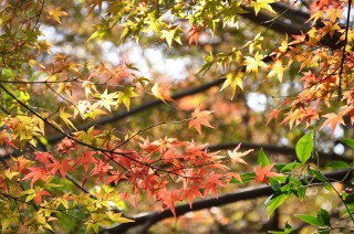 2012/11/14 13:20 日に日に、紅へと