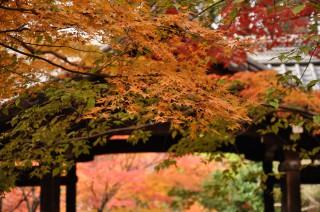 2012/11/24 10:27 真如堂にて