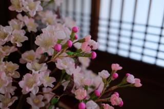 2016/03/01 右近の桜、床の間に咲く